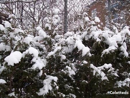 La neige 3